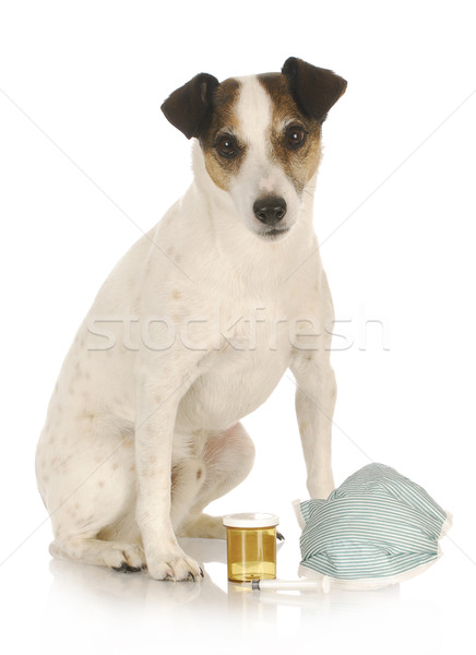 Veterinário cuidar terrier sessão suprimentos médicos feliz Foto stock © willeecole