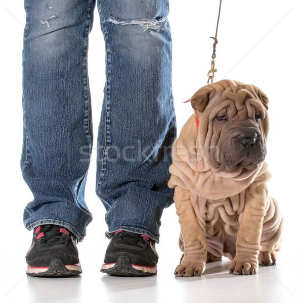 dog training Stock photo © willeecole