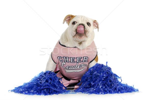Zdjęcia stock: Wesoły · psa · cheerleaderka · angielski · bulldog · w · górę