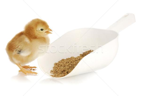 Csirke eszik újszülött merítőkanál háttér Stock fotó © willeecole