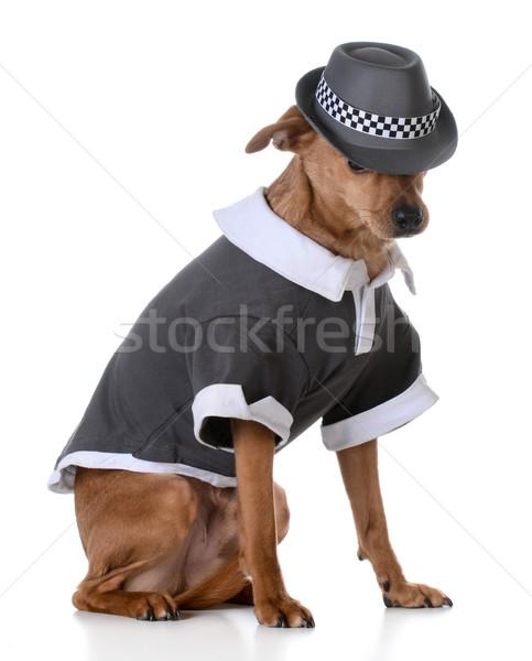 Cute psa mieszany shirt Zdjęcia stock © willeecole