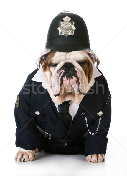 dog police or catcher Stock photo © willeecole