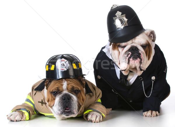 Hond brandweerman politieagent omhoog witte ogen Stockfoto © willeecole