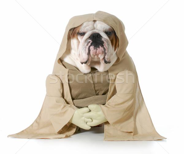 Bilge köpek İngilizce buldok kostüm Stok fotoğraf © willeecole