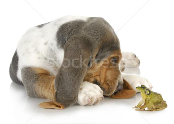 Stockfoto: Hond · kikker · ongebruikelijk · vrienden · cute · jachthond