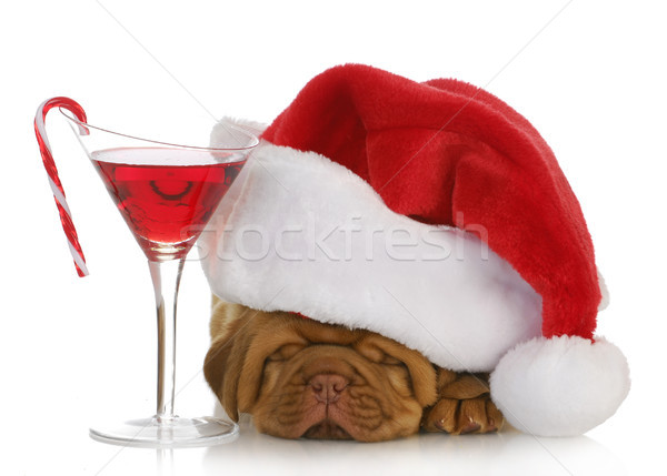 Рождества щенков Hat Сток-фото © willeecole