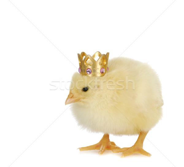 newborn chick Stock photo © willeecole