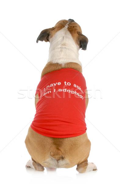動物 救助 採用 犬 戻る ストックフォト © willeecole