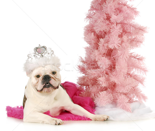Stock photo: princess dog