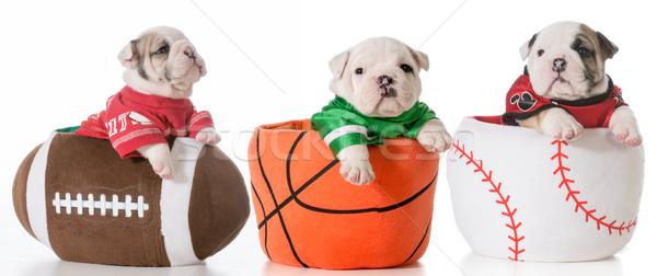 спортивных бульдог щенки сидят футбола Сток-фото © willeecole