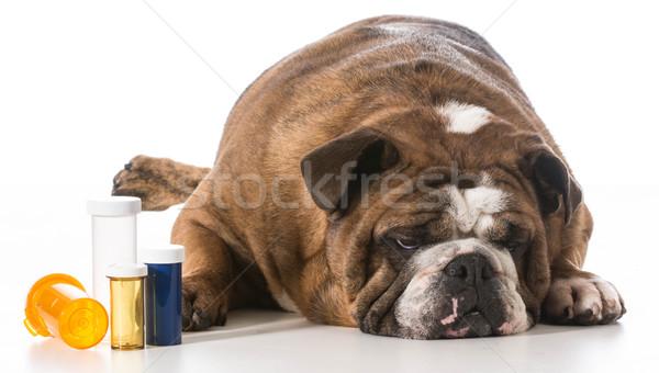 Weterynaryjny opieki psa obok kilka Zdjęcia stock © willeecole