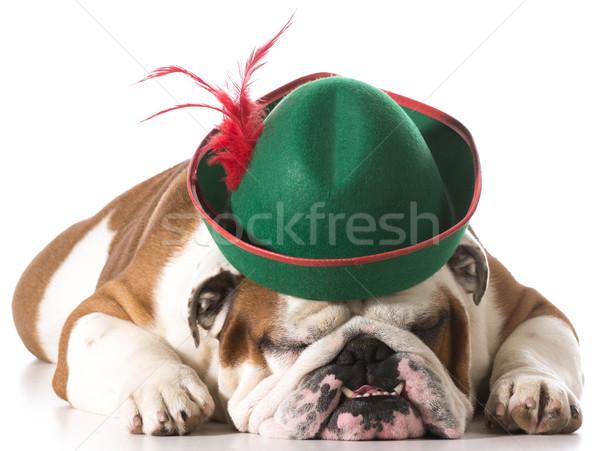 dog wearing hat Stock photo © willeecole