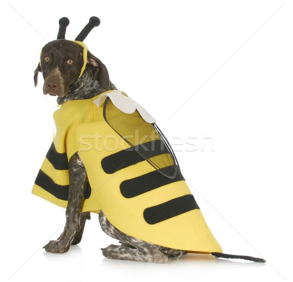 dog wearing bee costume Stock photo © willeecole