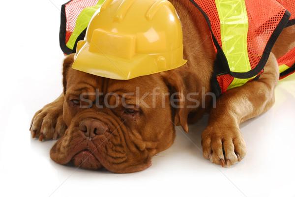 Картинки о строителях с животными