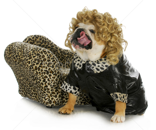 female bulldog  Stock photo © willeecole