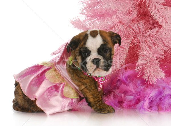 cute female puppy Stock photo © willeecole