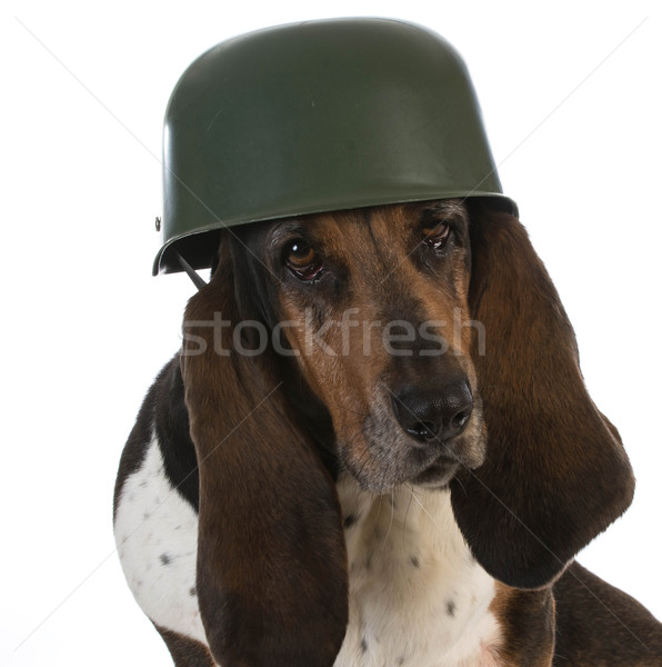 canine soldier Stock photo © willeecole