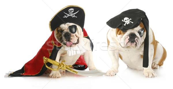 Foto stock: Cão · piratas · dois · inglês · para · cima · pirata