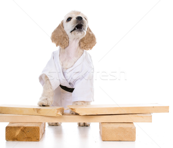 kung fu dog Stock photo © willeecole