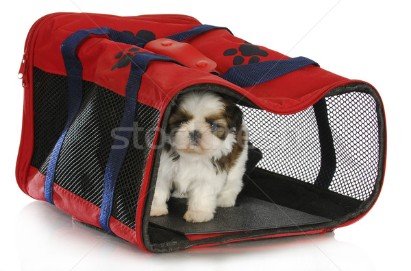 puppy carrier Stock photo © willeecole