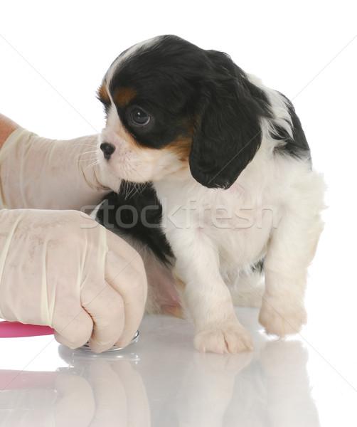 Veeartsenijkundig zorg koning dierenarts stethoscoop kantoor Stockfoto © willeecole
