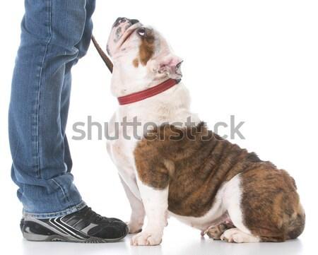 Hond uit brand stier Stockfoto © willeecole
