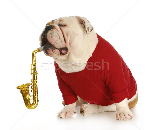 musical dog Stock photo © willeecole