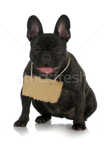 pet communication Stock photo © willeecole