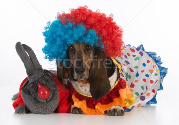 Dom bunny konijn jachthond clown Stockfoto © willeecole