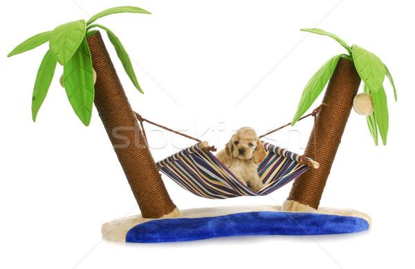 Stock fotó: Kutyakölyök · függőágy · megnyugtató · amerikai · fektet · kettő