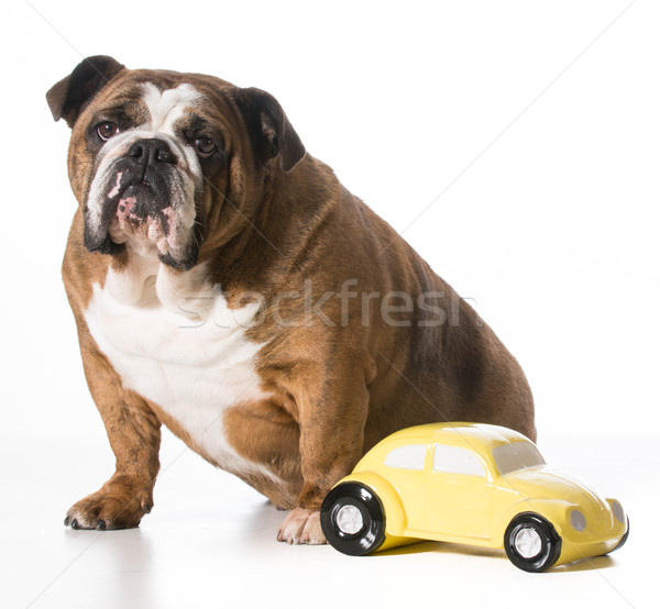 travelling with pets Stock photo © willeecole