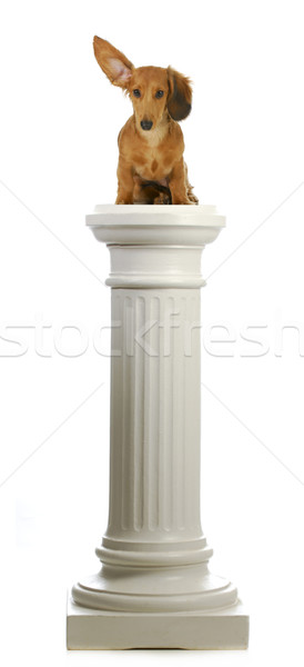 dog sitting on a pedestal  Stock photo © willeecole