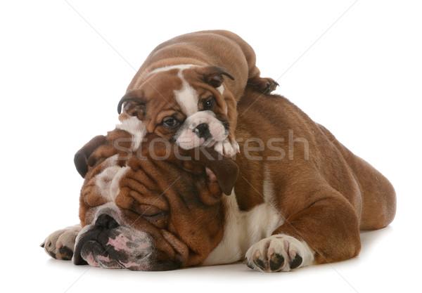 ストックフォト: 父から息子 · 日 · 孤立した · 白 · 口 · 子犬