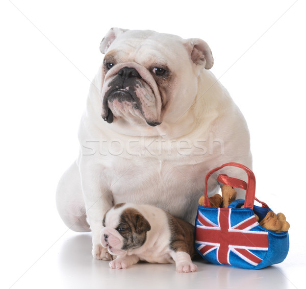 mother and daughter puppy Stock photo © willeecole