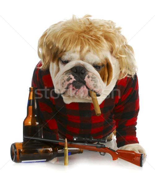 Cahil köpek İngilizce buldok sigara içme puro Stok fotoğraf © willeecole