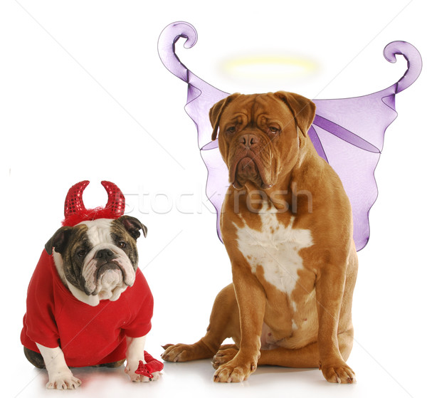 good and bad dog Stock photo © willeecole