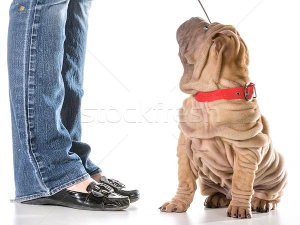犬の訓練 中国語 座って 綱 所有者 ストックフォト © willeecole