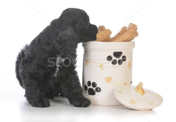 dog sitting beside cookie jar Stock photo © willeecole