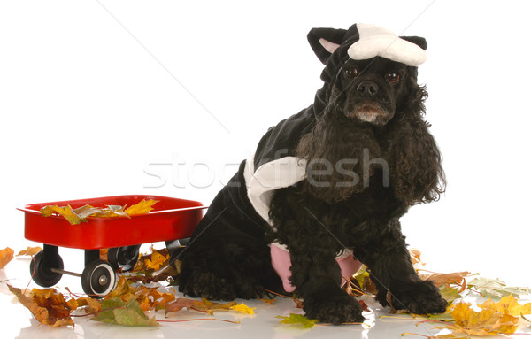 american cocker spaniel dressed up as a cow in autumn setting Stock photo © willeecole