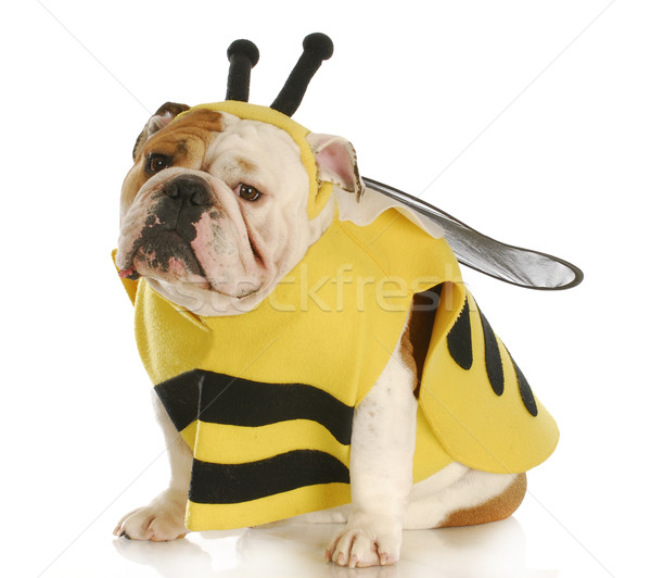 dog dressed up like a bee Stock photo © willeecole