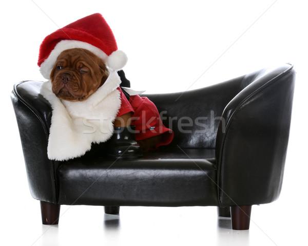 Karácsony kutyakölyök Bordeau felfelé ahogy mikulás Stock fotó © willeecole