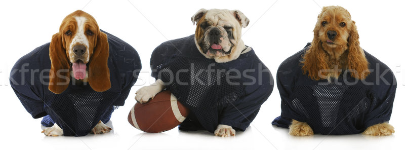 football team Stock photo © willeecole