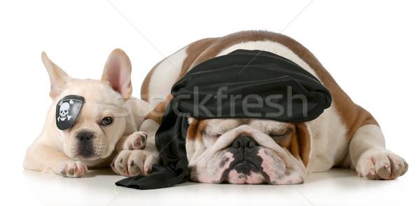 dog pirates Stock photo © willeecole