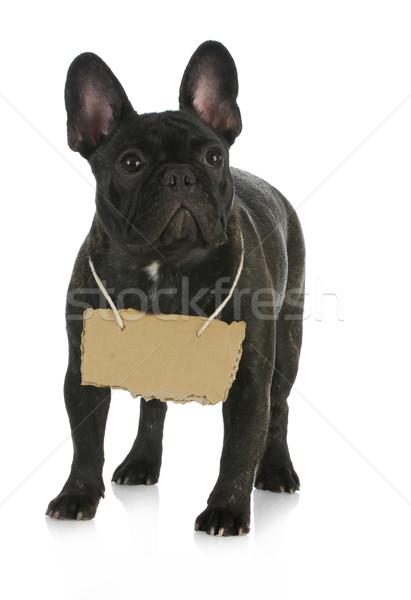фото символ собака