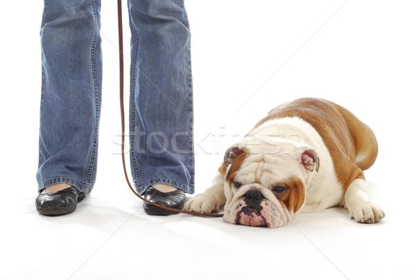 Kutya engedelmesség képzés angol bulldog fekszik Stock fotó © willeecole
