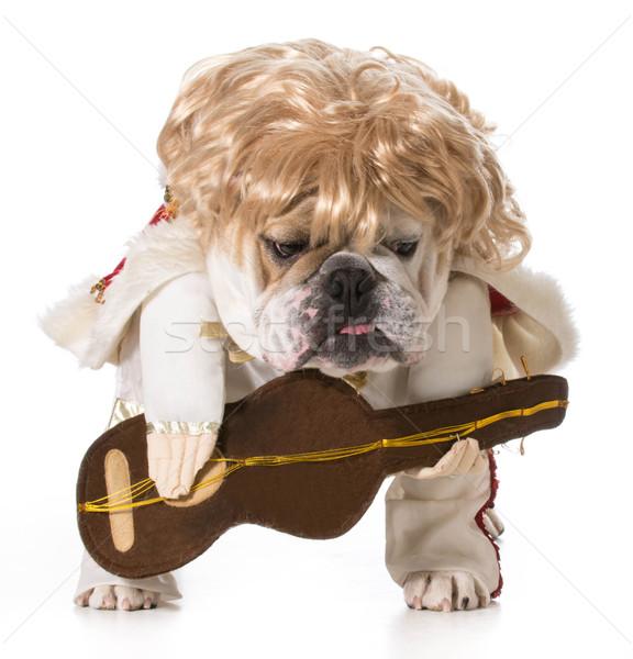 гончая собака английский бульдог играет гитаре Сток-фото © willeecole