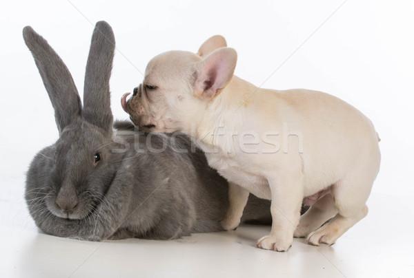 baby animals Stock photo © willeecole