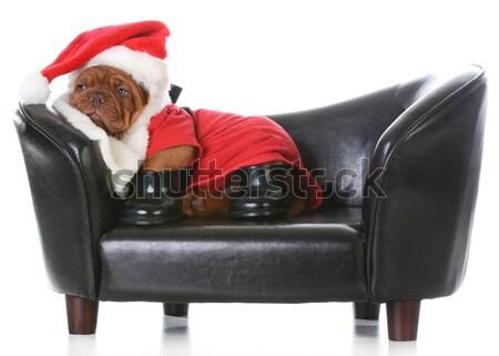 christmas dog Stock photo © willeecole