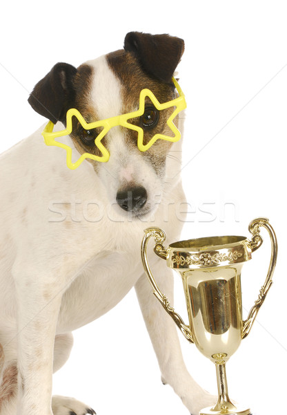 champion dog Stock photo © willeecole