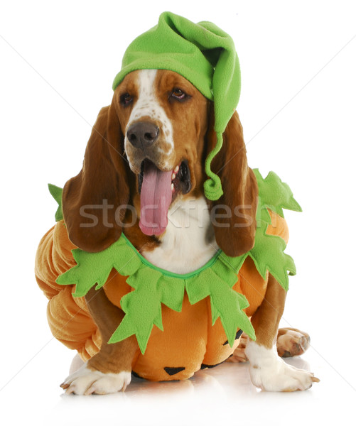 halloween dog Stock photo © willeecole